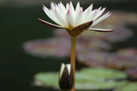 The Miracle of the one single flower. Photo by Barbara Mattio