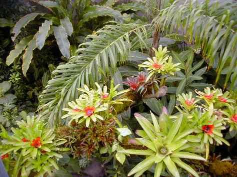 Costa Rican RainforestPhoto by Barbara Mattio