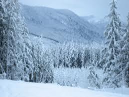 winterpines