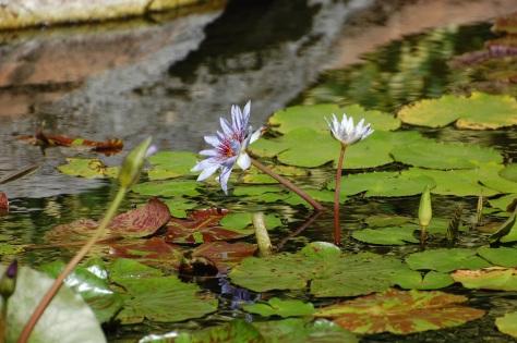 Water garden in BahamaPhoto by Barbara Mattio
