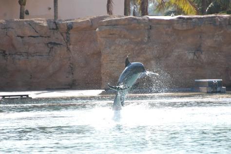 Dolphin BayPhoto by Barbara Mattio