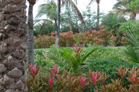 Bahama gardens in JanuaryBarbara Mattio