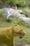 Cleveland Metropolitan Zoo