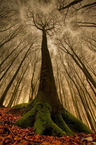 Truly Magestic Tree that come from a seed someone sowed to make their world a better place to be.
