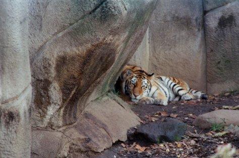 Shh, animal sleeping
