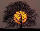 The tree and sun connect us with Mother Earth and with the Divine