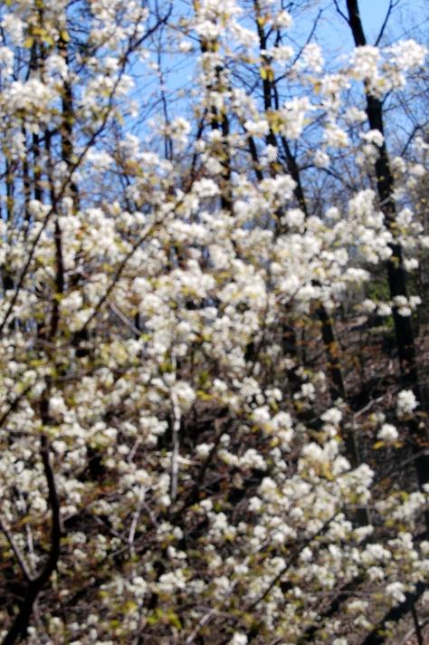 flowering trees everywhere