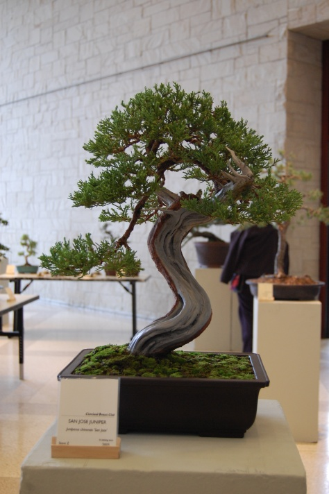 The skill in the fingers who work with Bonsai is awesome