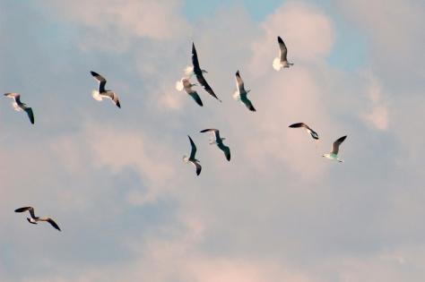 Peace Convocation; Asheville, N.C. Peace doves released. Photograph taken by Barbara Mattio 10-10-10. Copyright 2010 by Barbara Mattio