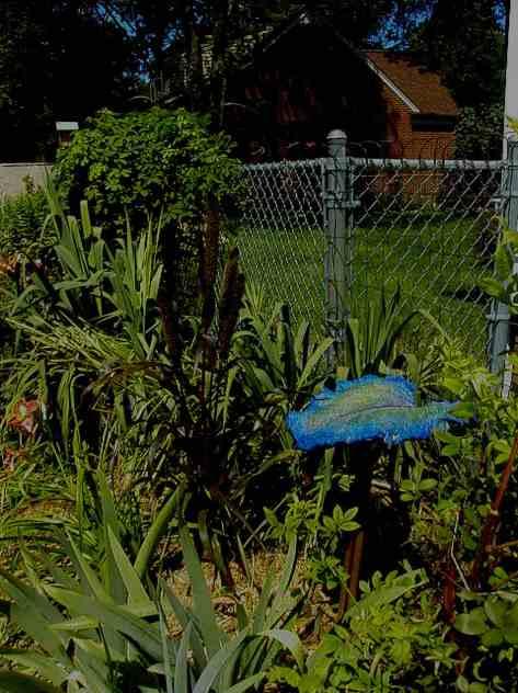 My garden photograph copyrighted 2013