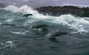 The beauty of breaking waves