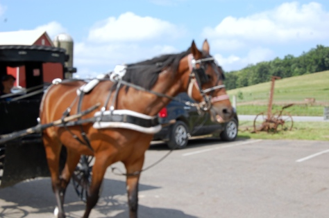 An Amish horse pulling a closed carriage.