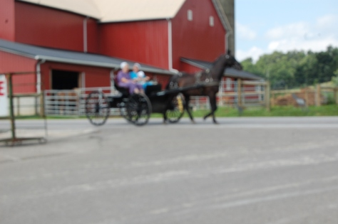 Amish in horse-drawn buggy.