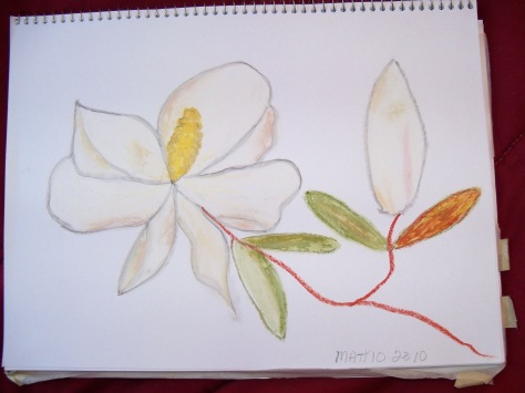 Magnolia done with oil pastels. Copyright 2012