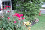 Late summer garden Photographed and copyrighted 2013
