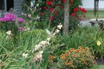 Late summer garden. Photographed by Barbara Mattio