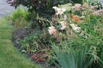 Late summer garden Photographed and copyrighted by 2013
