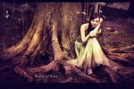 The peace of mind tree.