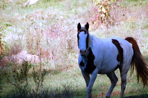 Fall grazing. Black Mountain, NC. Photographed and copyrighted by Barbara Mattio 2007