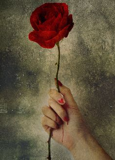 The rose of peace