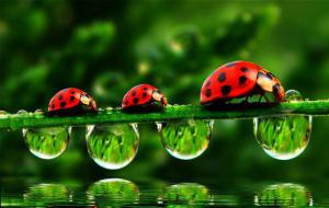 Lady bugs and rain drops