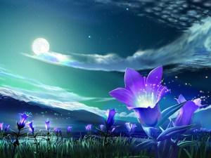 stockvault-purple-flowers1167636.jpg