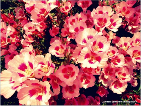 Pretty Pink Flowers.....