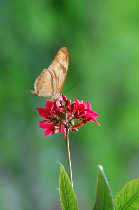 Butterfly. Photographed and copyrighted by Barbara Mattio 2014