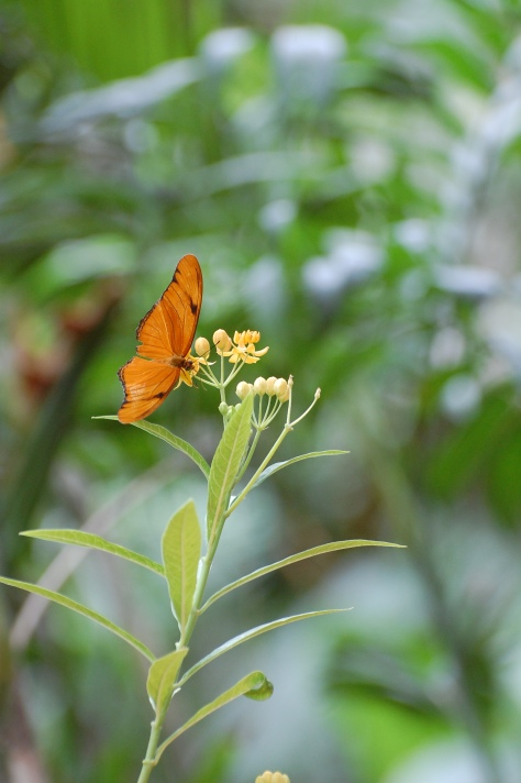 Butterfly photographed and copyrighted by Barbara Mattio 2014