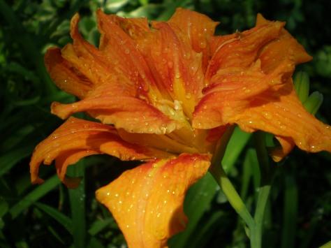 Orange for Baby Bling's birthday