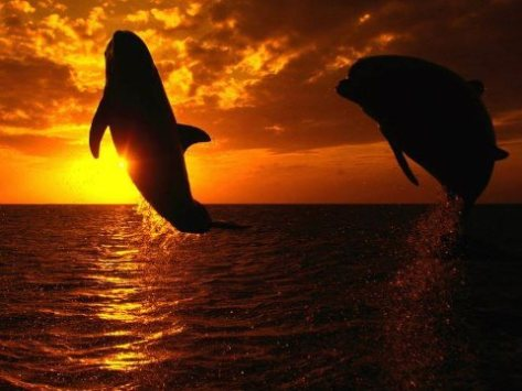 Dolphins living free until we completely destroy our planet