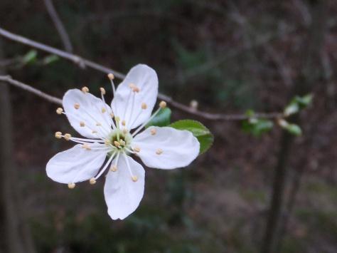 burst into blossom