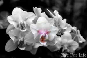 Stand Out Orchids