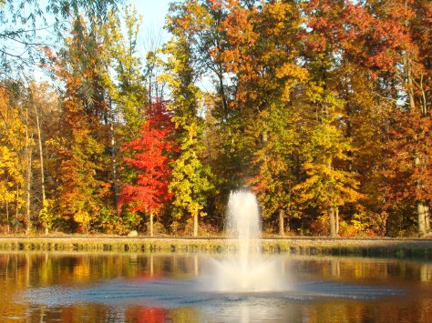 My neighborhood pond, Autumn.   Photographed and copyrighted by Barbara Mattio 2013