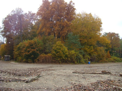 autumn color at the beach. Photographed and copyrighted by Barbara Mattio 2011
