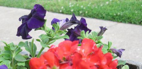 macro floral