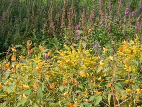 wildflowerlaken