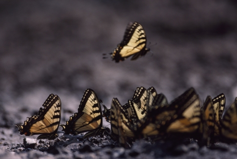 To Texas butterflies. Photographed and copyrighted by Barbara Mattio 2007