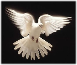 The Dove of Peace.