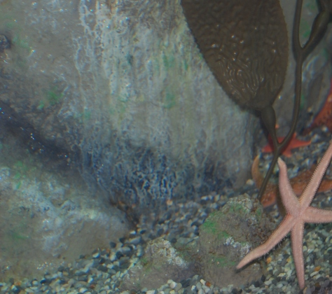 Starfish - Cleveland Aquarium - Copyright Barbara Mattio 2015
