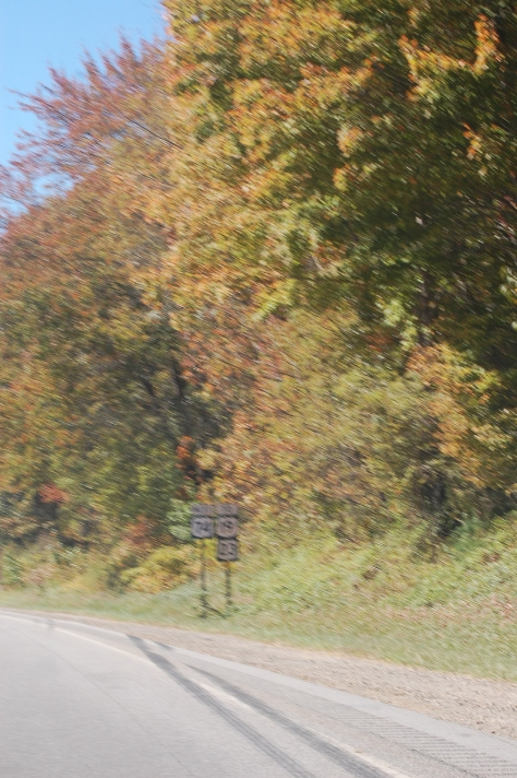 Leaves in Motion (from a speeding car) Photograph & Copyright Barbara Mattio 2015