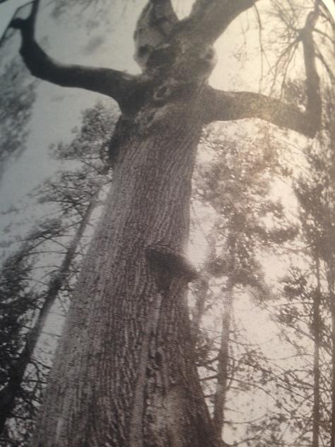 Tree Awakening