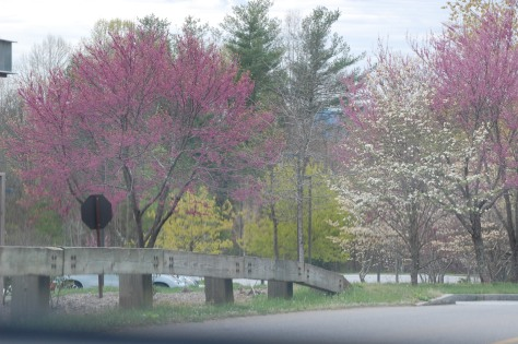Flowers in bloom on trees. Photograph and copyright by Barbara Mattio, 2016