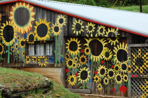 I named this the Sunflower House. Photography and copyright by Barbara Mattio, 2016