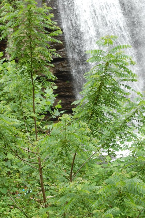 The falls through the trees. Photograph and copyright by Barbara Mattio, 2016