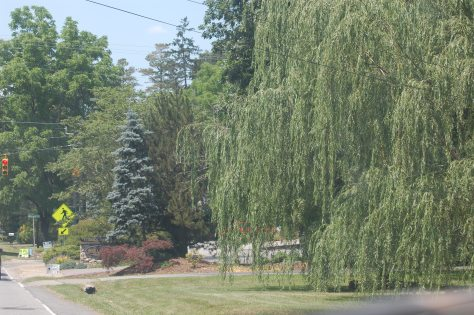 I loved the weeping willow tree on the mountainside. Photograph and copyright by Barbara Mattio, 2016