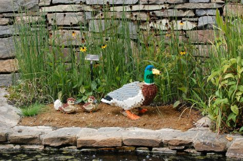 Lego duck family. Photograph and copyright by Barbara Mattio,2016