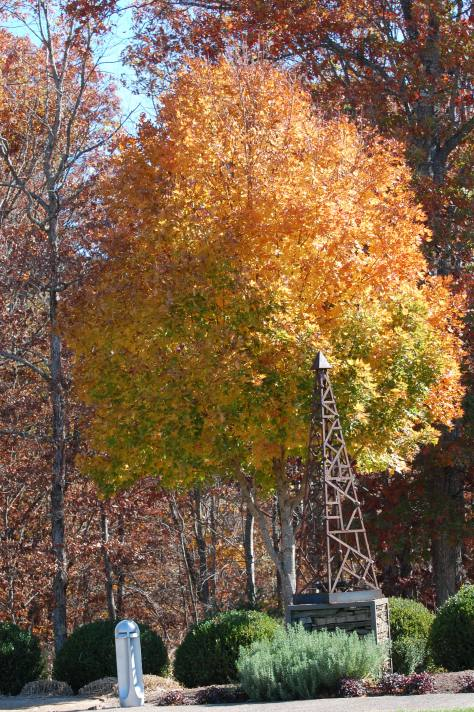 Two tone tree